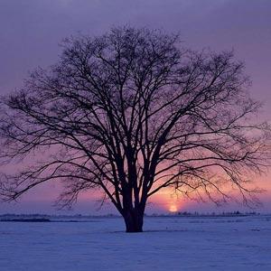 Paisajes Invernales